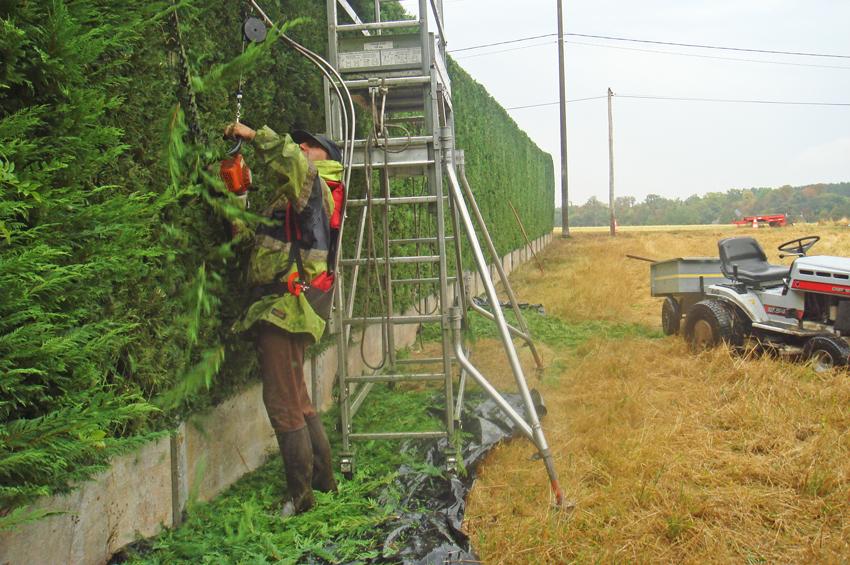 01 services la personne jardin taille de haie henri for Service a la personne jardinage