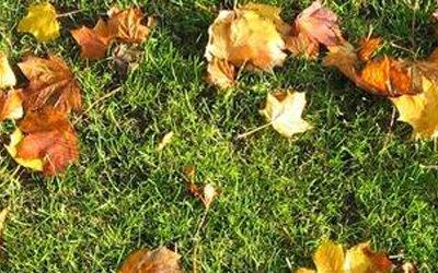 Conseil de jardinier pour l 39 entretien de vos massifs for Conseil du jardinier