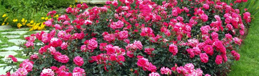 Dictons du jardinier en avril for Conseil du jardinier