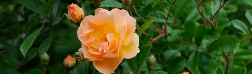 Paysagiste Orléans - Dictons du jardinier